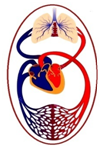 Circulation Heart